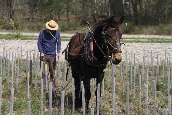 Loic Pasquet e il mulo spagnolo